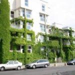 Vegetatie en luchtkwaliteit